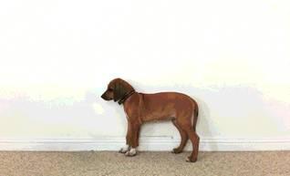 chien-qui-grandit