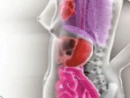 deplacement-organes-femme-enceinte