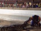 mettre-main-gueule-crocodile-peur