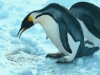 2-pingouins-1-trou