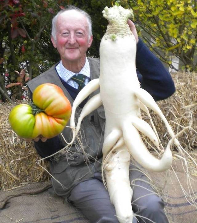 legumes-geants-09