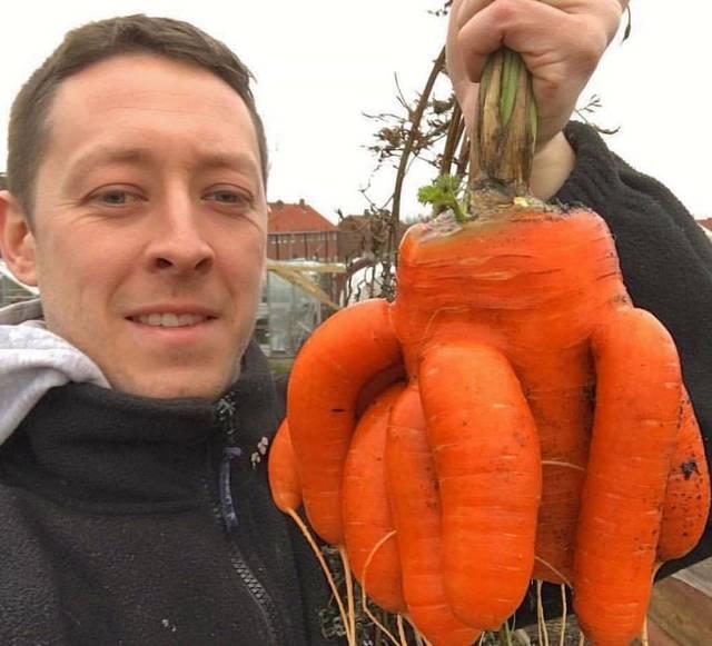 legumes-geants-13