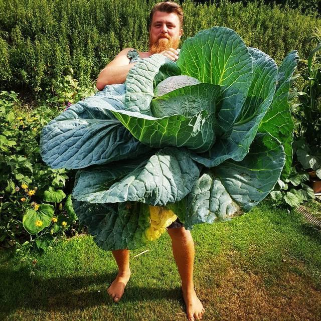 legumes-geants-15