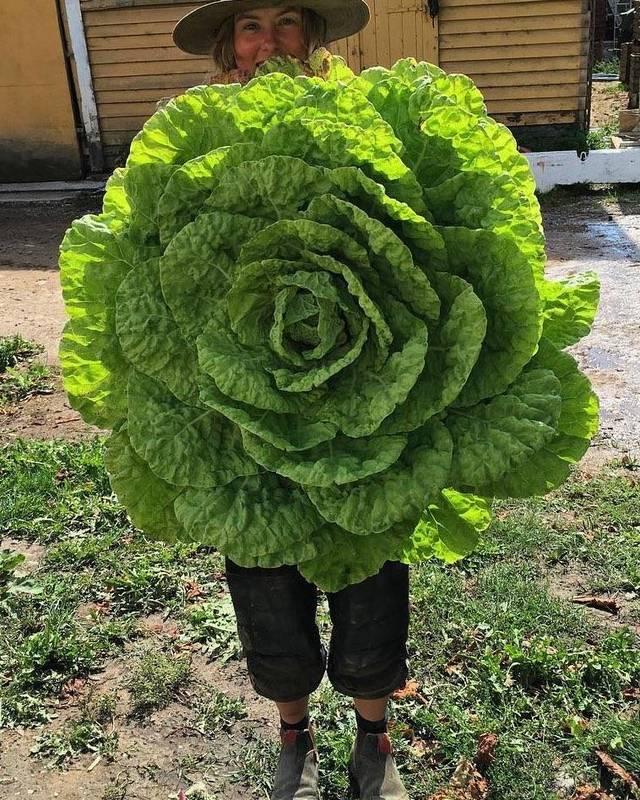 salade-geante