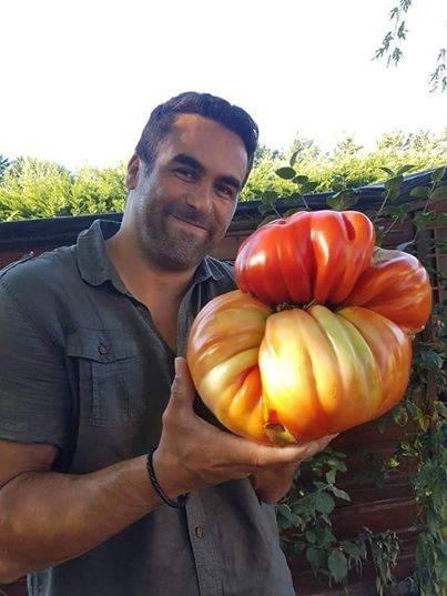 tomate-geante