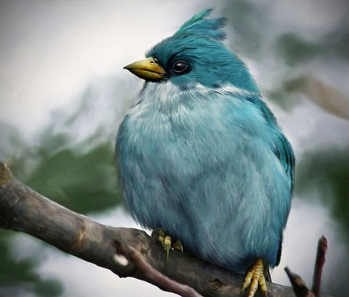 oiseaux-angry-birds-vrai-02
