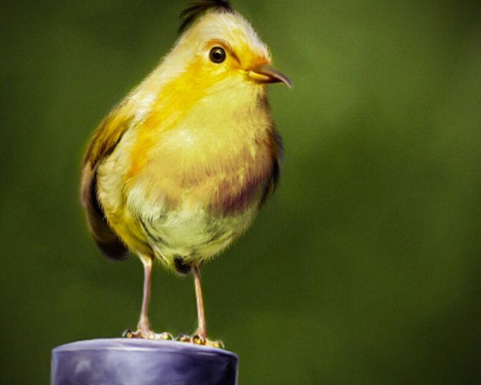 oiseaux-angry-birds-vrai-03