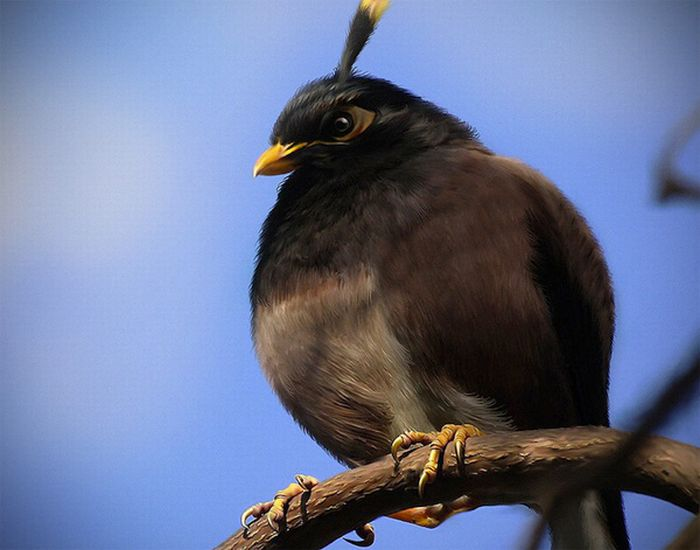 oiseaux-angry-birds-vrai-04