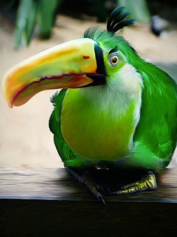 oiseaux-angry-birds-vrai-06