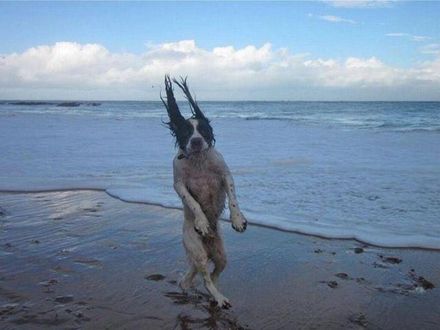 photos-chiens-bon-moment-12