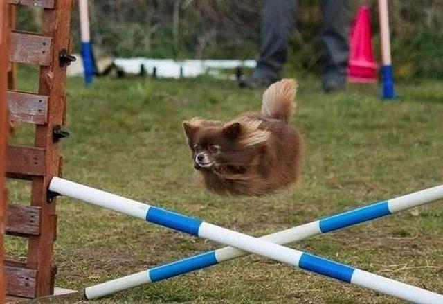 photos-chiens-bon-moment-29