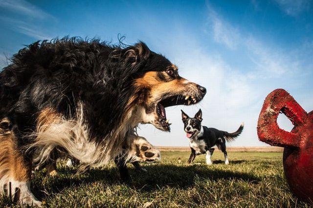 photos-chiens-bon-moment-30