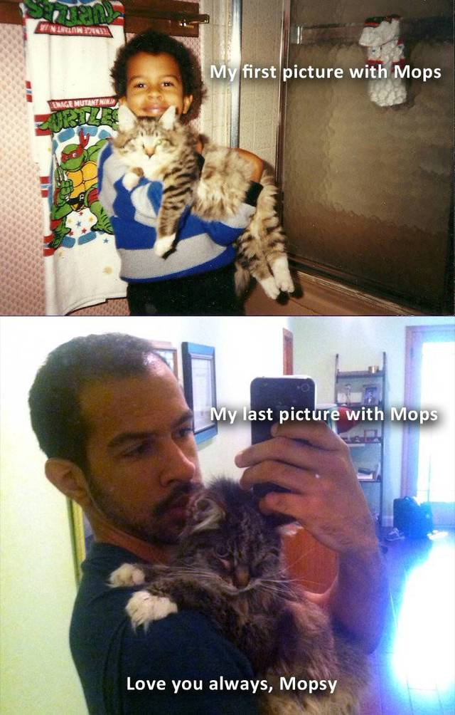 premieres-dernieres-photos-chiens-chats-02