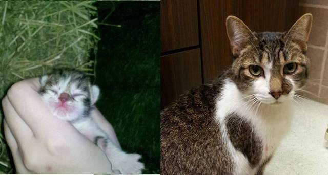 premieres-dernieres-photos-chiens-chats-07