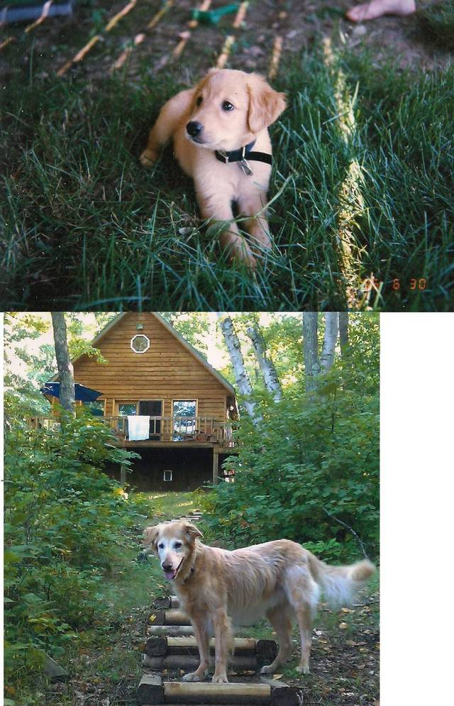 premieres-dernieres-photos-chiens-chats-16