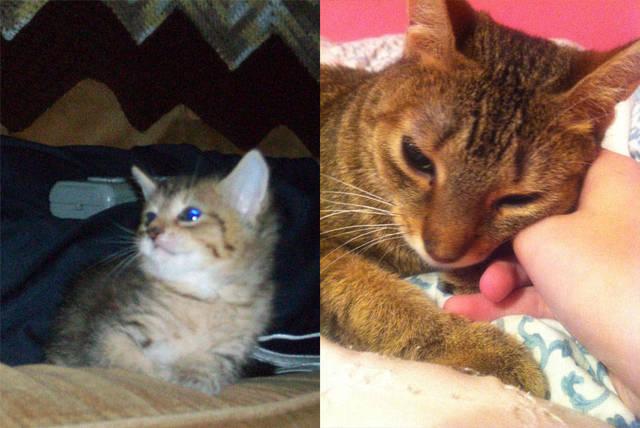 premieres-dernieres-photos-chiens-chats-21