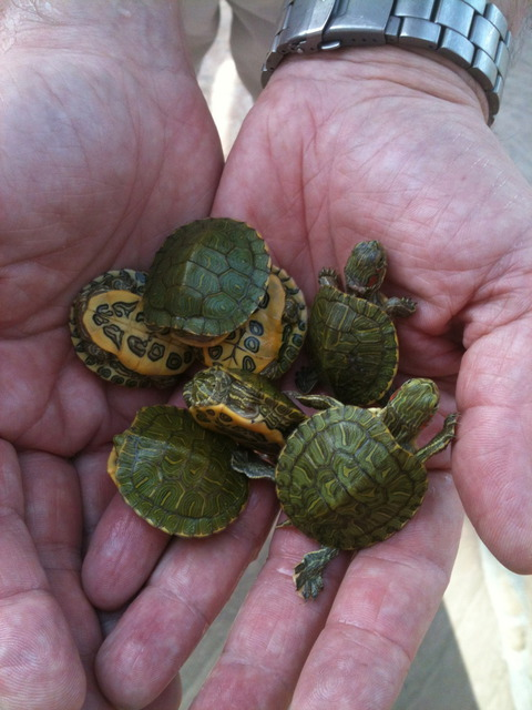 cousins-tortues-ninjas