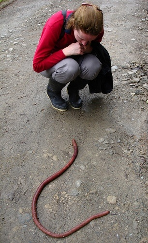 ver-terre-taille-serpent