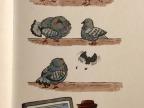 pigeon-friendzoned
