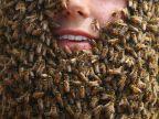 visage-rempli-abeilles