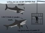 requins-sont-gentils