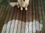 chien-place-pluie-sec