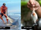 travail-salaire-poissons
