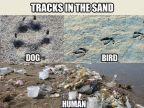 traces-dans-sable