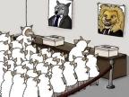 politique-avec-des-moutons