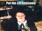 met-chromosome-dans-sac