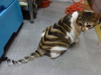 chat-coupe-fashion