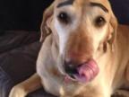 sourcils-dessines-chien