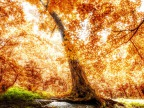arbres-foret-feuilles-orange