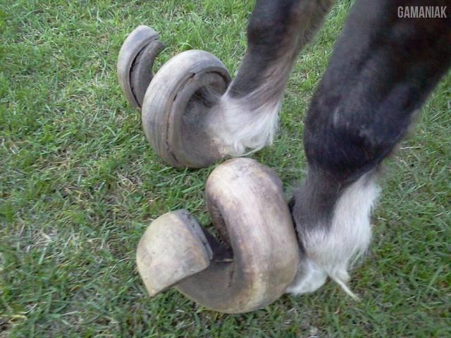 sabots-cheval-pas-limes