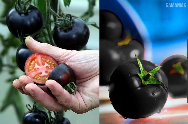 tomates-noires