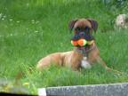 chien-3-balles-gueule