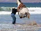 truc-touche-pied-cheval-mer