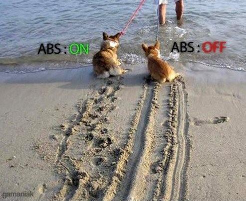 fonctionnement-abs-2-chiens