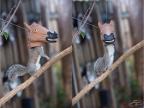 mangeoir-pour-ecureuils-tete-cheval