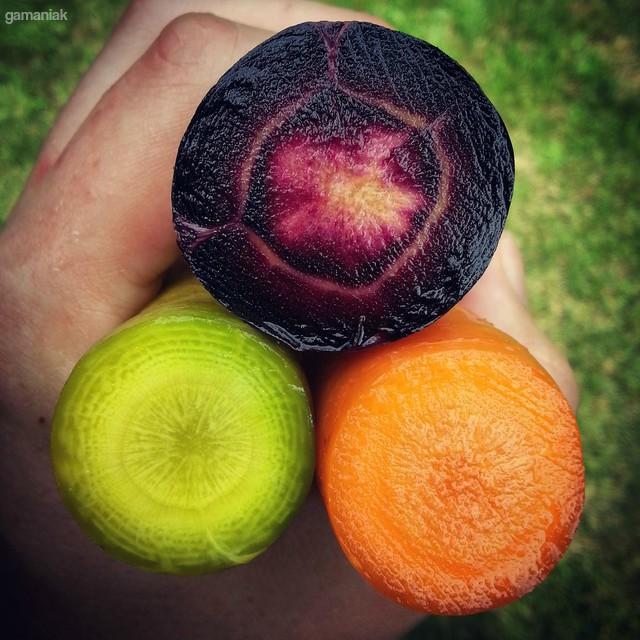 carottes-vertes-violettes-orange