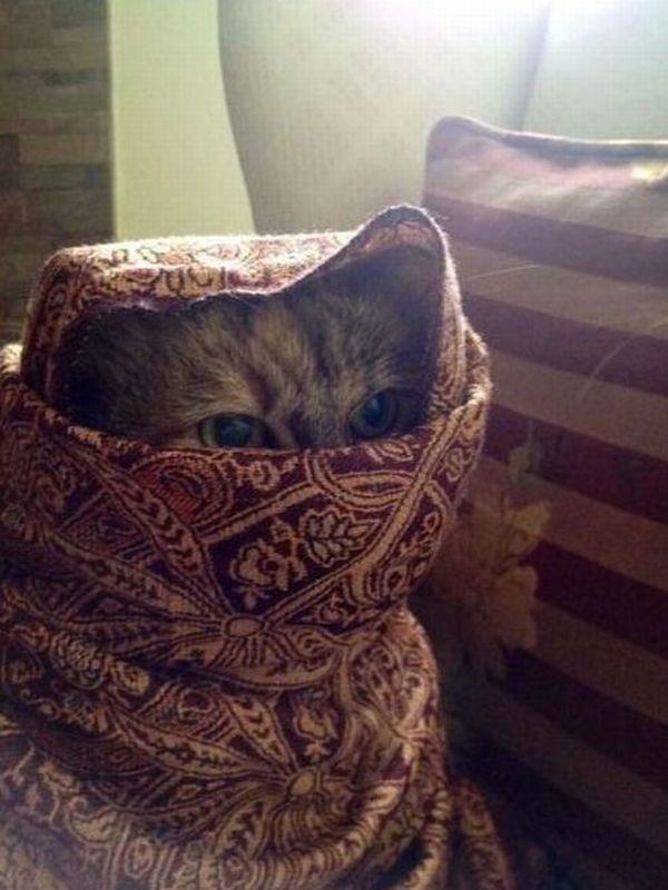 chat-niqab