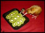 kiwis-cannibales
