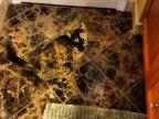 jai-failli-perdre-mon-chat-dans-salle-bain