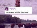 quelquun-peut-enlever-ces-vaches-avec-photoshop
