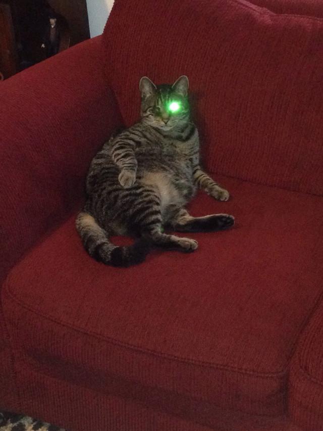 chat-borgne-flash-terminator