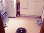 chien-tres-peur-aspirateur