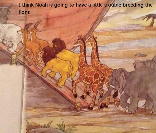 noe-fait-pas-difference-entre-lion-lionne