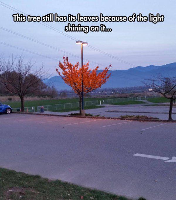 arbre-encore-feuilles-grace-lampadaire-eclaire