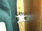 rat-grille-entrain-grimper