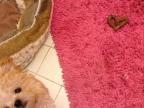 chien-caca-coeur